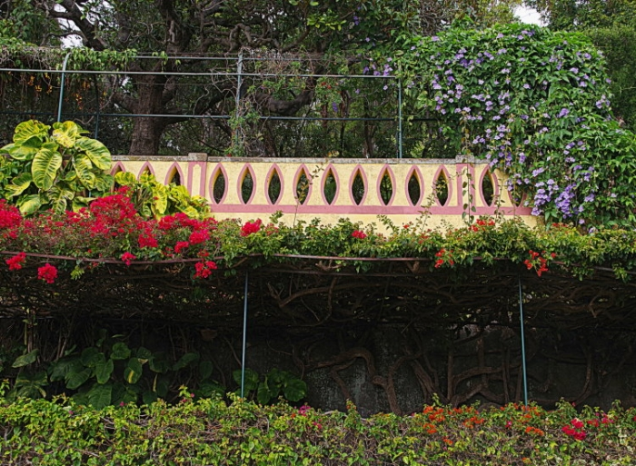 photos,madere,funchal,jardin