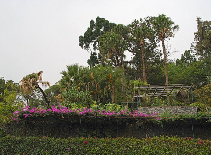 portugal, madere, jardin, funchal